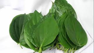 The Health Benefits of Bitter Leaf Herb