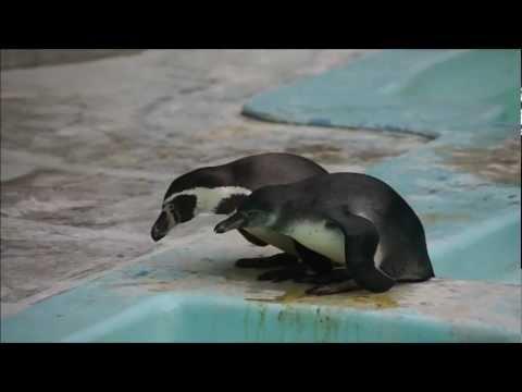 野毛山動物園 赤ちゃんペンギンのゴハン