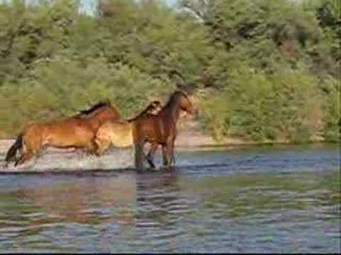 Wild Horse Play in Arizona