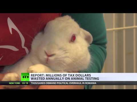 $9,6mln to inject LSD in rabbits: Controversial US animal drug testing 'veiled in secrecy'