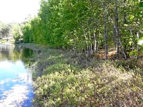 Homes for Sale - Lot 2 Myrick Lake Rd Danbury WI 54830 - Nancy Oakes