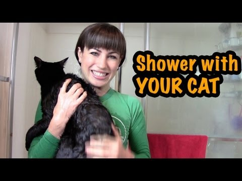 How to Shower with Your Cat