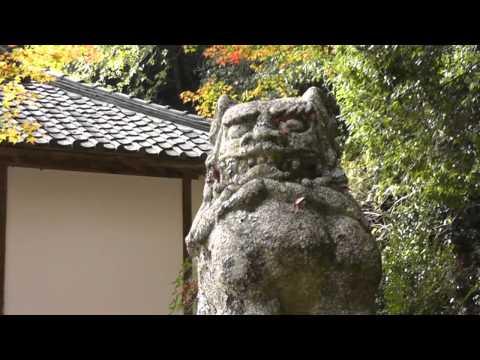 「天澤寺紅葉色鮮やか!」HD作品 by テレビ猪名川
