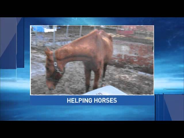 Horses Removed on Neglect Concerns