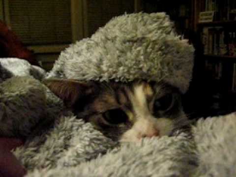 Doctor Zhivago Kitty