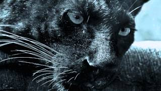 Alex Di Stefano - Black Panther (Original Mix)