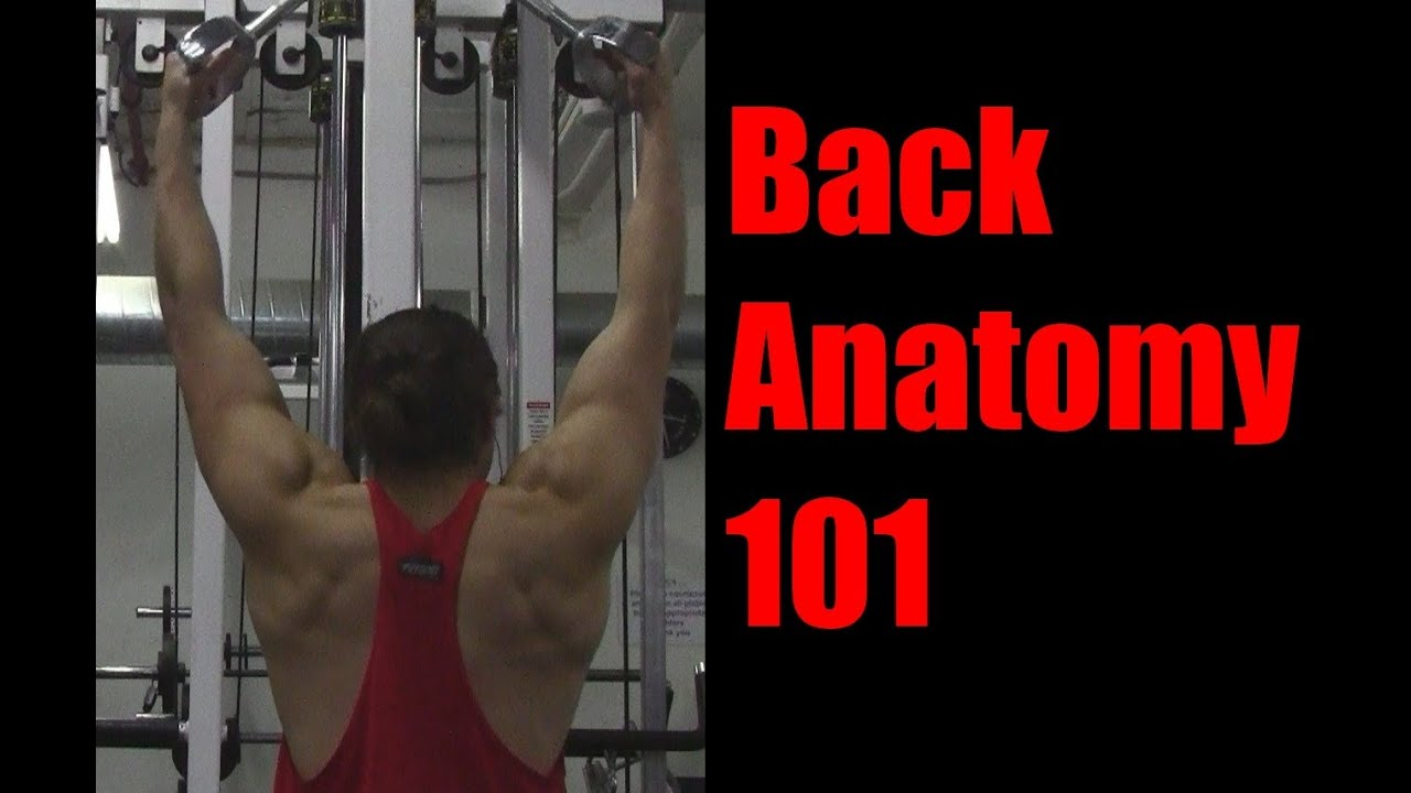 Back Anatomy 101: Exercises to Target Lats, Traps ...