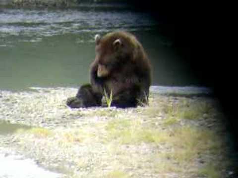 Masterbating Bear... Conan O'brian Would Be Proud video