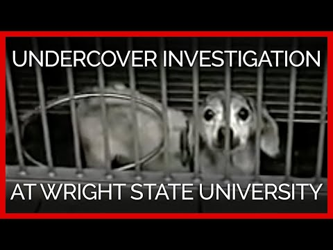 Undercover Investigation at Wright State University Video