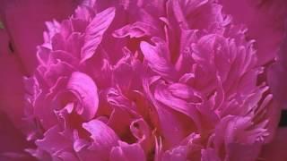 Oft Denk Ich Daran (05-18) (Musik Von Siegfried Zabransky)