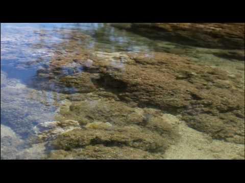 Vintage PBh - Coral Reefs