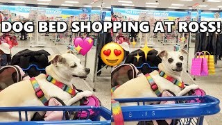 HAPPY GOES SHOPPING! DOG BED SHOPPING AT ROSS! | HAPPY DOGGY HAPPY
