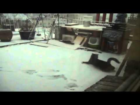 winter starts in Antwerp 03022012.wmv