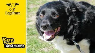 Ben is a Gentle Border Collie! | Dogs Trust Manchester