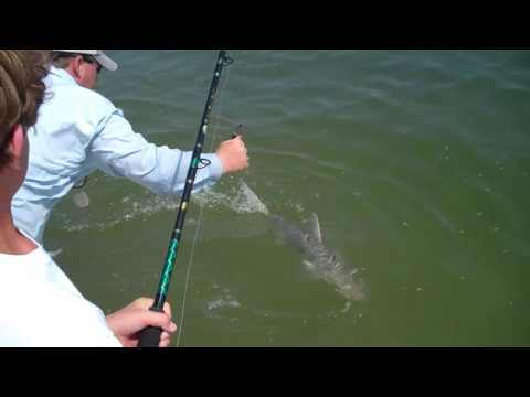 Bonnethead shark fishing