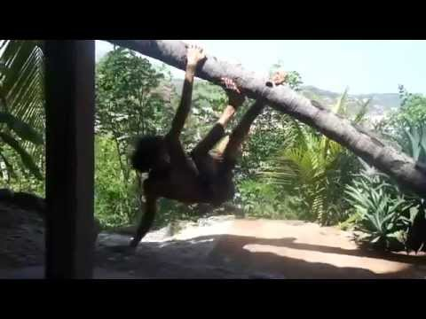 coconut tree improvisation - Jonathan Fletcher