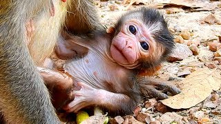 Great News, Welcome To Huge, Healthy & Strong New Born Baby Monkey!, Diamond Just Gave New Birth