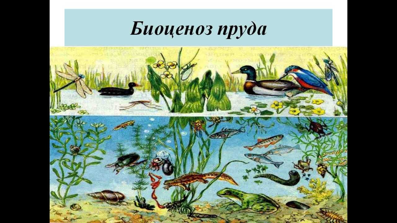 Биоценоз википедия