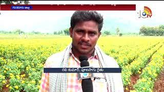 వాణిజ్య పంటలపై నష్టంతో..! Special Story On Flower Farming In Guntur