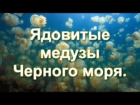 Ядовитые медузы Черного моря.