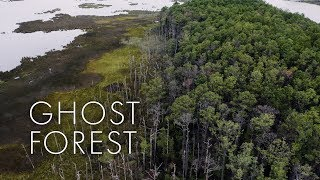Ghost Forest: Dying trees show climate change's advance