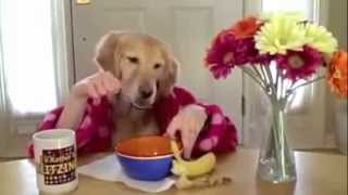 Коты и собаки едят руками. Cats and dogs eating with hands