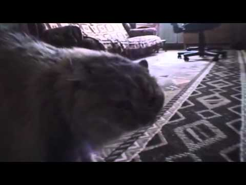 Cat Dubstep(CatStep)