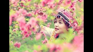 Nhạc Cách Mạng, Nhạc Đỏ Trữ Tình Mùa Xuân - Những Bản Nhạc Tết Dâng Trào Cảm Xúc Bao Thế Hệ Việt