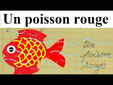 Dessin facile d un poisson rouge forme g om trique youtube for Achat d un poisson rouge