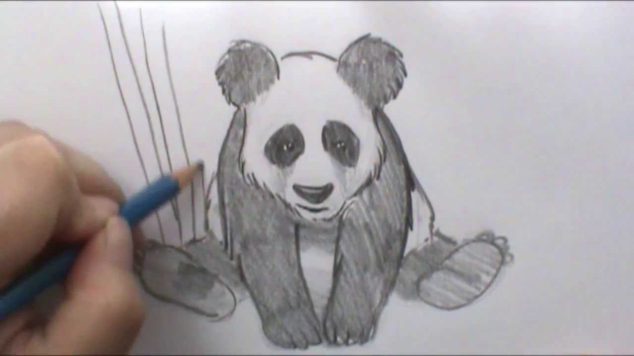 Best 25 Panda drawing ideas on Pinterest  Cute panda
