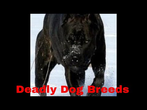 Top 10 Banned Dogs in USA 2017