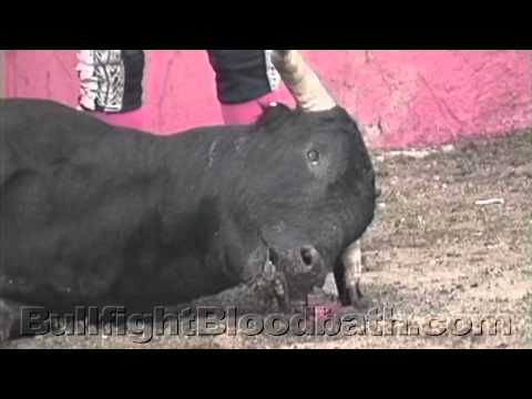 Discover / Diners Club Sponsor Bullfighting (Graphic)