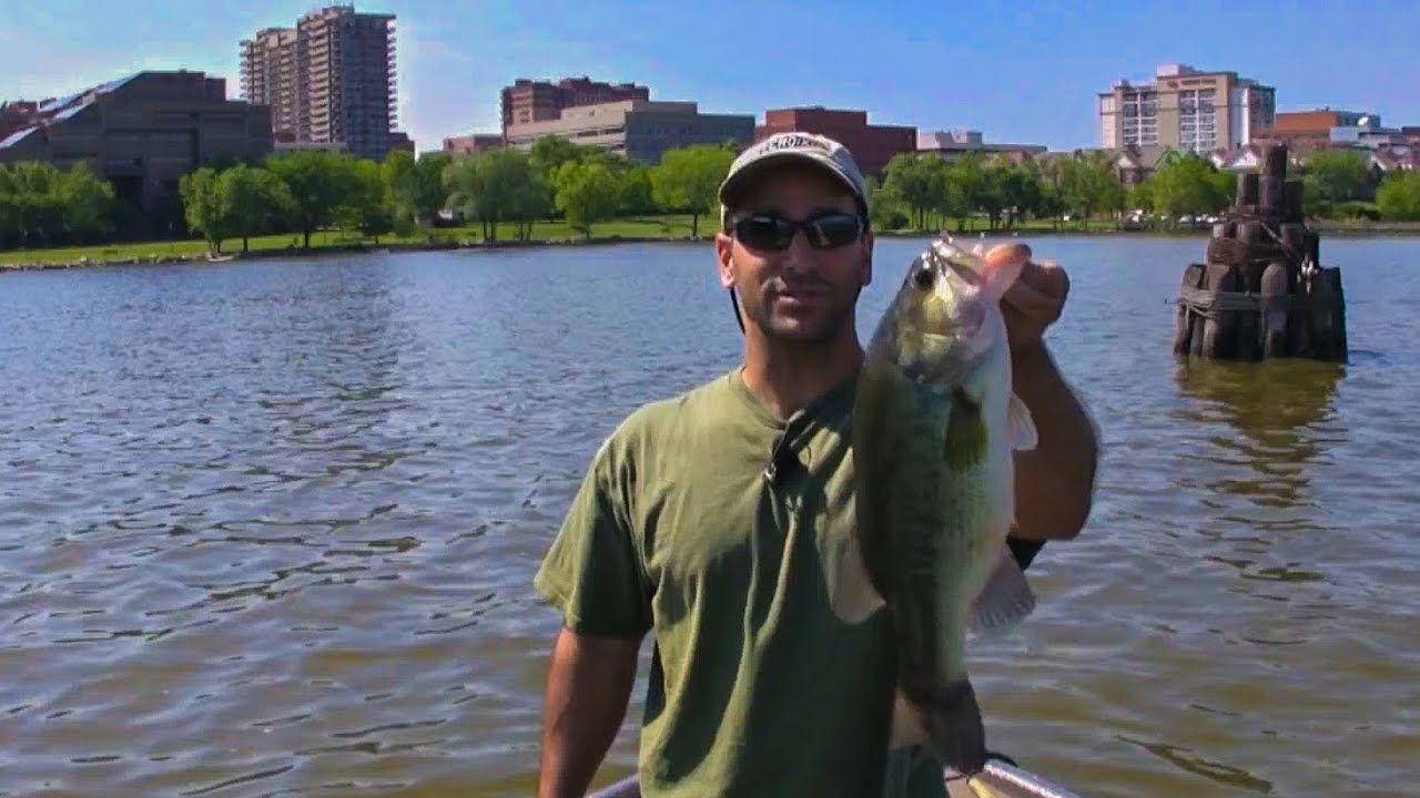 Potomac river bass fishing schooled up part 2 fishing fever for Bass fishing washington
