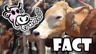 Hambaa Fact | Qurbani Special | bangla Funny Video | Dhaka Prank LTD