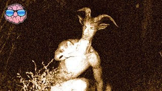 Top 10 EXTINCT ANIMALS Caught On Tape