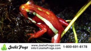 What Dart Frogs will do well in a Habisphere?