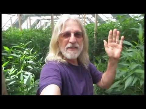 Grow Marijuana: Light Depravation (Dep) Greenhouse