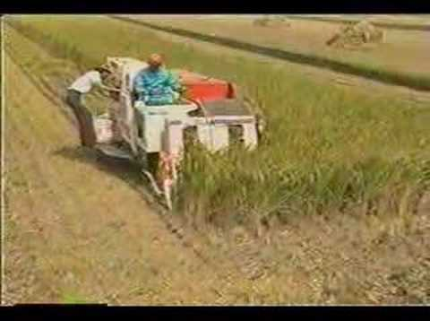 kubota R1-43 Combine Harvester Working