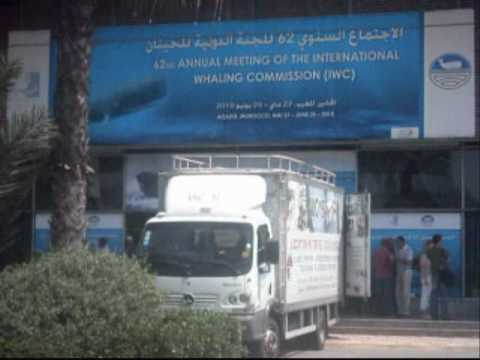 International Whaling Commission Meeting, Agadir, Morocco 2010.wmv