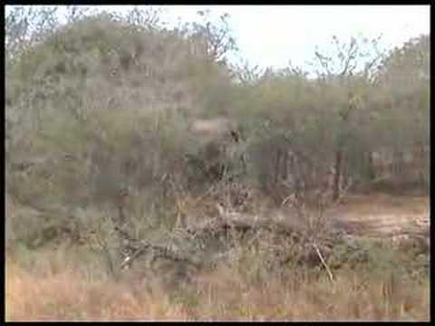Zuid-Afrika, filmpje 4