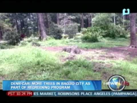 NewsLife: DENR-CAR: More trees in Baguio City as part of regreening program
