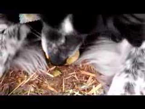 Dog Queenie Queenie The Egg Sucking Dog