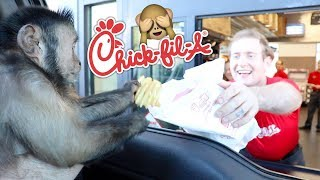 Monkey Visits Chick-Fil-A Drive Thru For Lunch!