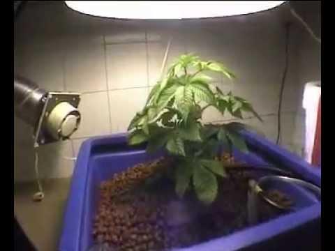one plant - 400W - 164G