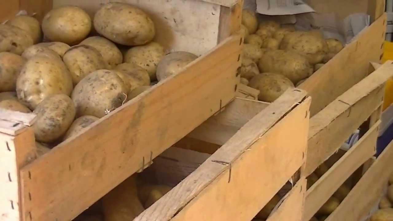 quand et comment r colter les pommes de terre patates youtube. Black Bedroom Furniture Sets. Home Design Ideas