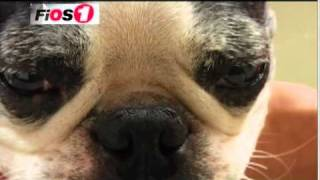 Dr. Malik performs acupuncture on a dog on FIOS TV