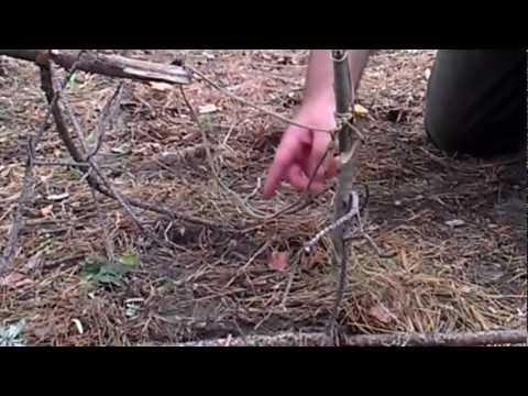 как ловить фазанов