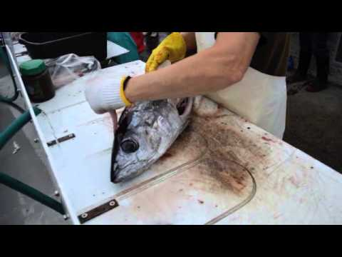 How to Fillet an Albacore Tuna