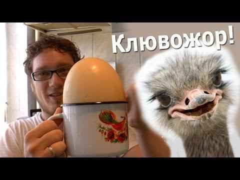 Готовим яйцо страуса с Нифёдычем ^_^ (НБ 5)