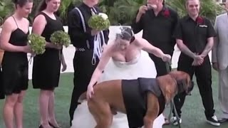 Ultimate Wedding Fail Video Compilation | Funny Fail Clips - WM